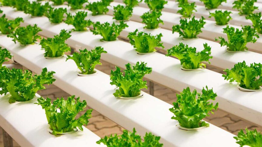 The major types of Hydroponic Systems